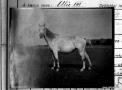 pmzk12_alix_-_1929