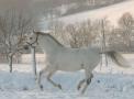 januar-2007-01-25-121