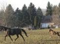 uojf2008-_januar_-19